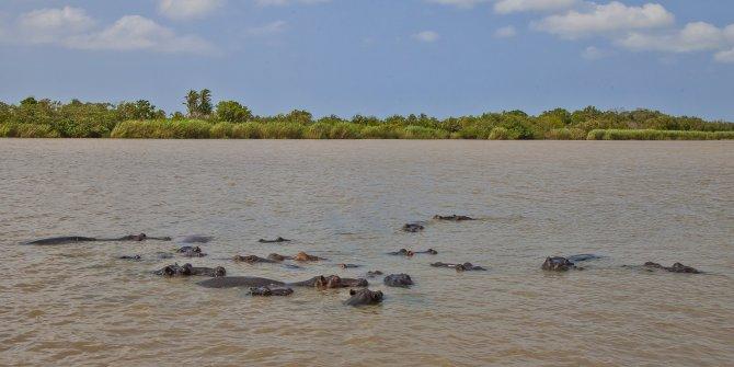 İSimangaliso Milli Parkı, ziyaretçilerine yaban hayatı şöleni sunuyor