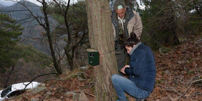 Kazdağı Milli Parkı'na fotokapan konuldu