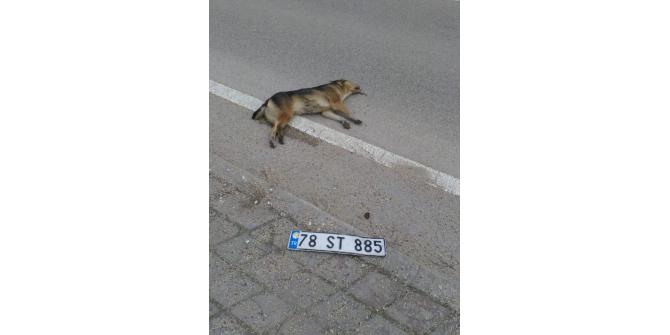 Köpeğe çarpan sürücü plakasını düşürüp kaçtı
