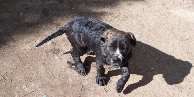 10 metrelik kuyuya düşen yavru köpeği itfaiye kurtardı