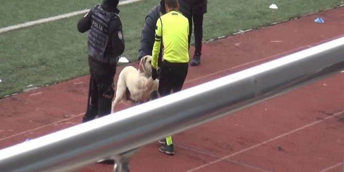 Kars'ta sahaya giren köpeği hakem çıkardı