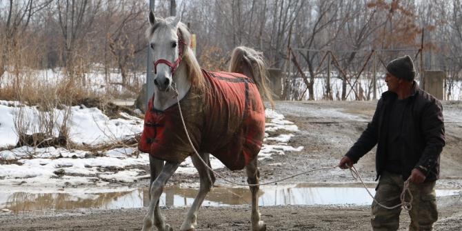 Erzincan'da tek tırnaklı hayvanlara mikroçipli takip