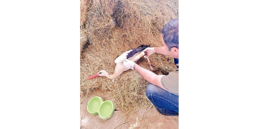 Bingöl'de bacağı kırık leylek tedavi altına alındı