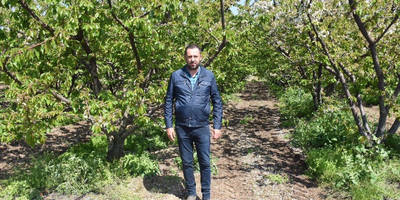Kemalpaşa'da kiraz hasadında geri sayım