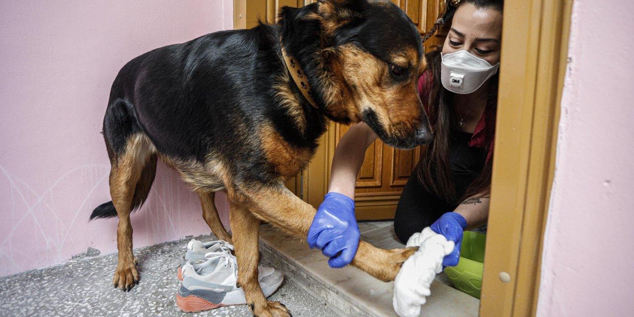 Evde beslenen hayvanlarda virüse karşı şampuan ve sabunlu önlem