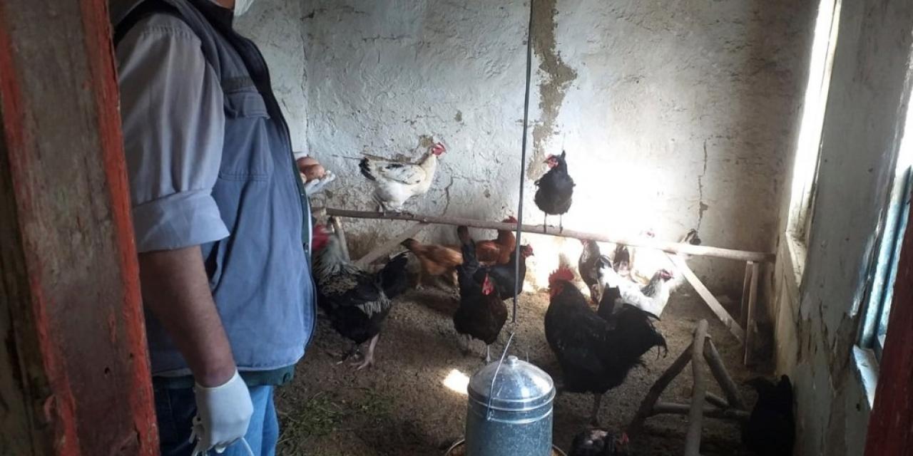 Karantina altındaki köydeki tavukları ve köpeği için CİMER'e başvurdu