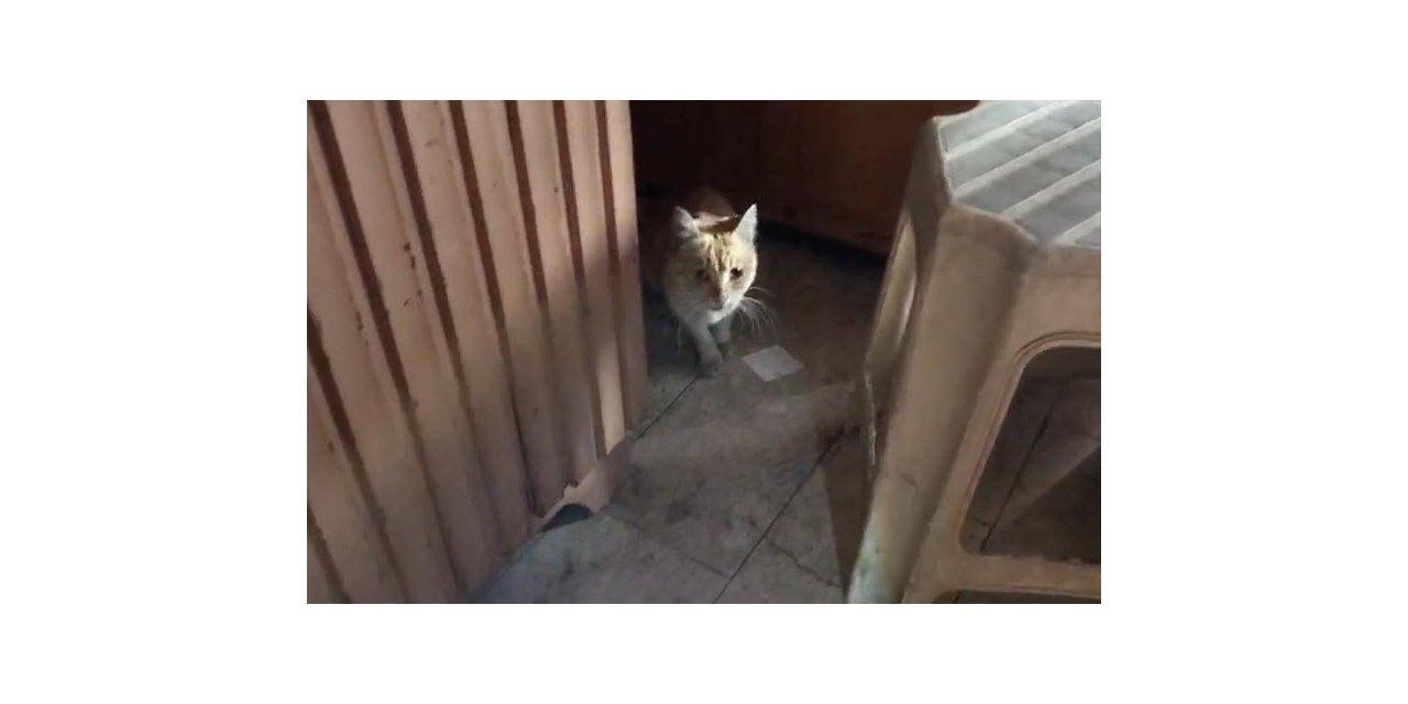 Dükkanda mahsur kalan kedi ve 7 yavrusu kurtarıldı