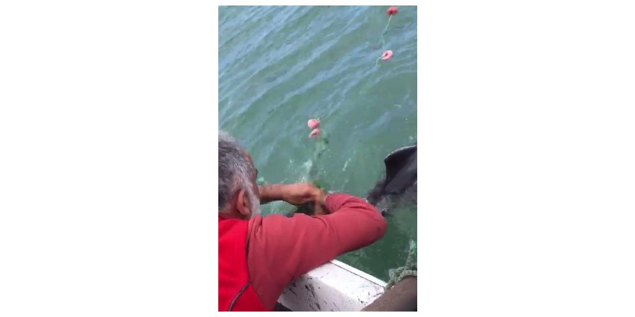 """Ağlara takılan yunus balığını böyle kurtardı: """"Dur oğlum, dur bir tanem seni kurtaracağım"""""""