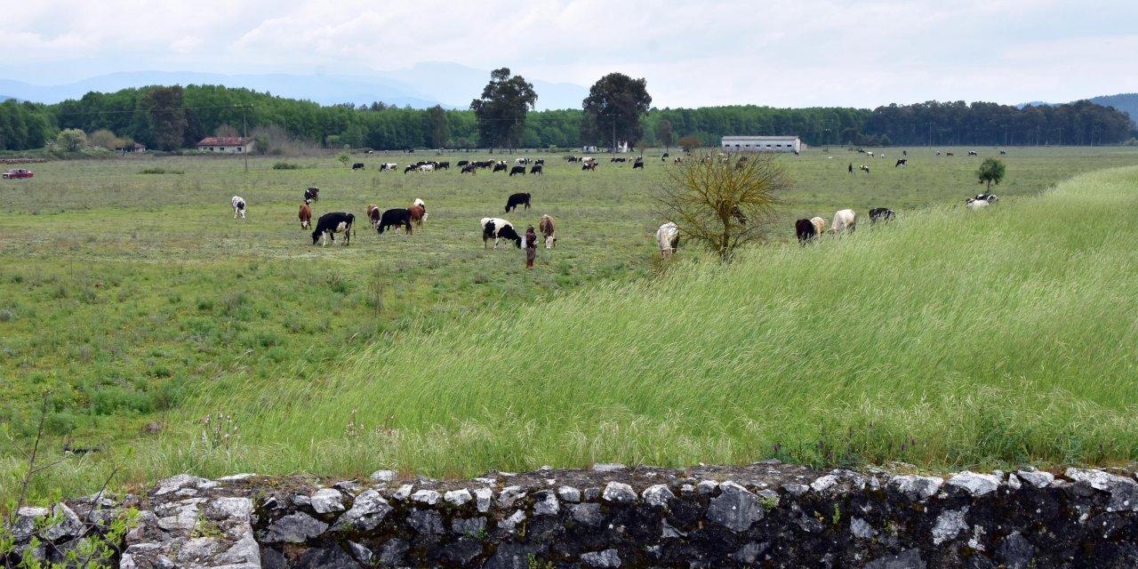 2'nci Dünya Savaşı döneminin 'İncirlik Üssü' ineklerin otlağı oldu