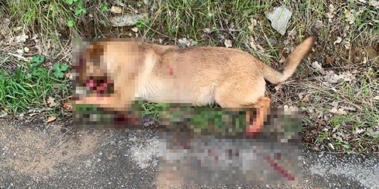 1 sokak köpeğini öldürüp, 2'sini yaralayan kişi: Eşimi kurtarmak için ateş ettim