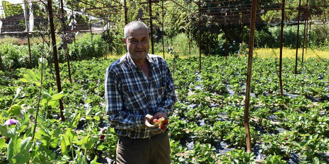 Marmarisli çiftçiler evlerinin bahçelerinde üretime devam ediyor