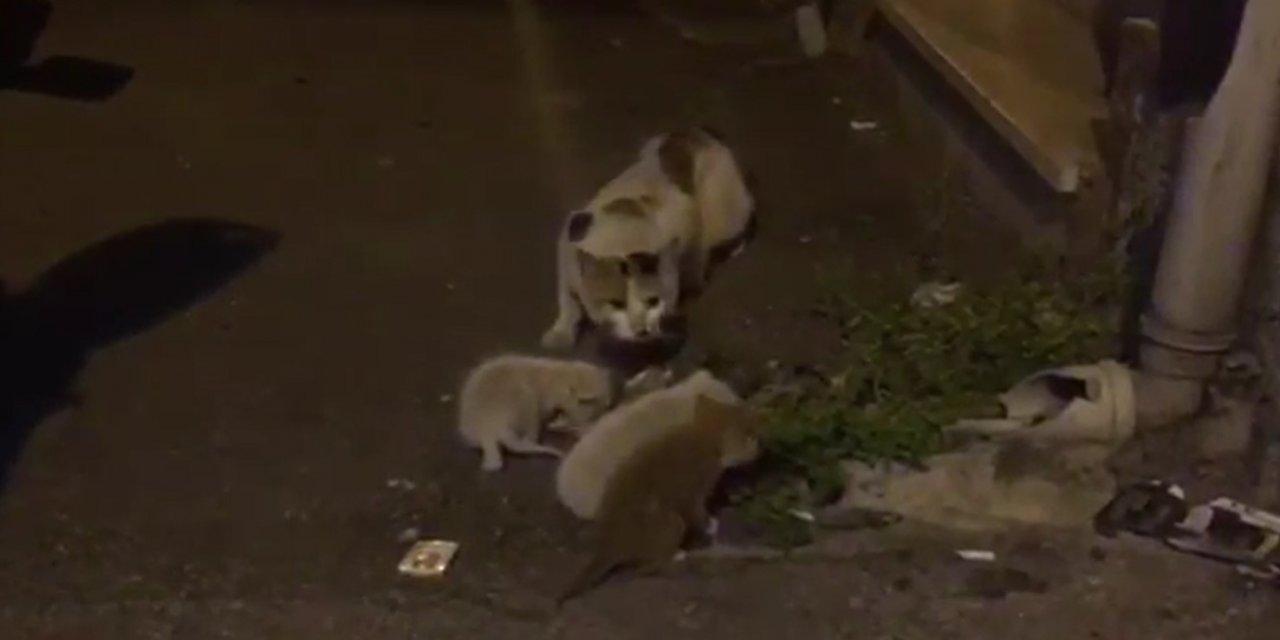 İş yerinde kilitli kalan yavru kediler kurtarıldı
