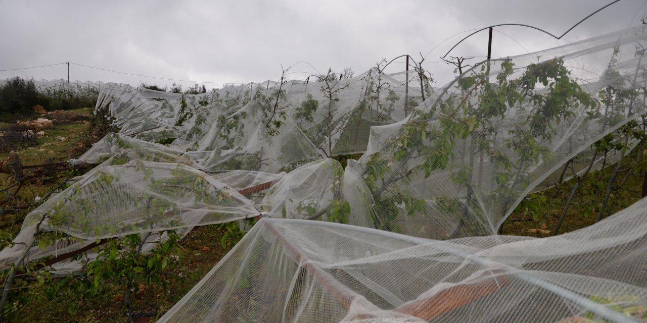 Erdemli'de bin dönüm tarım arazisi doludan zarar gördü