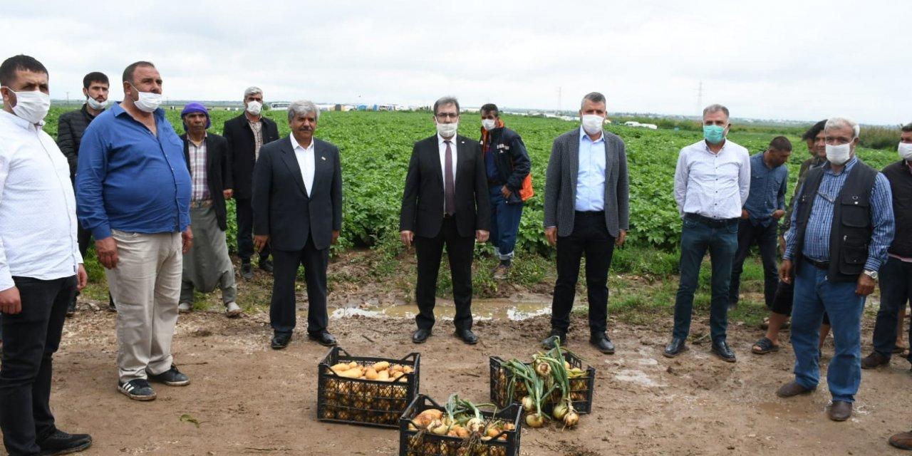Soğan ve patates üreticilerinden 'ithalat engellensin' talebi