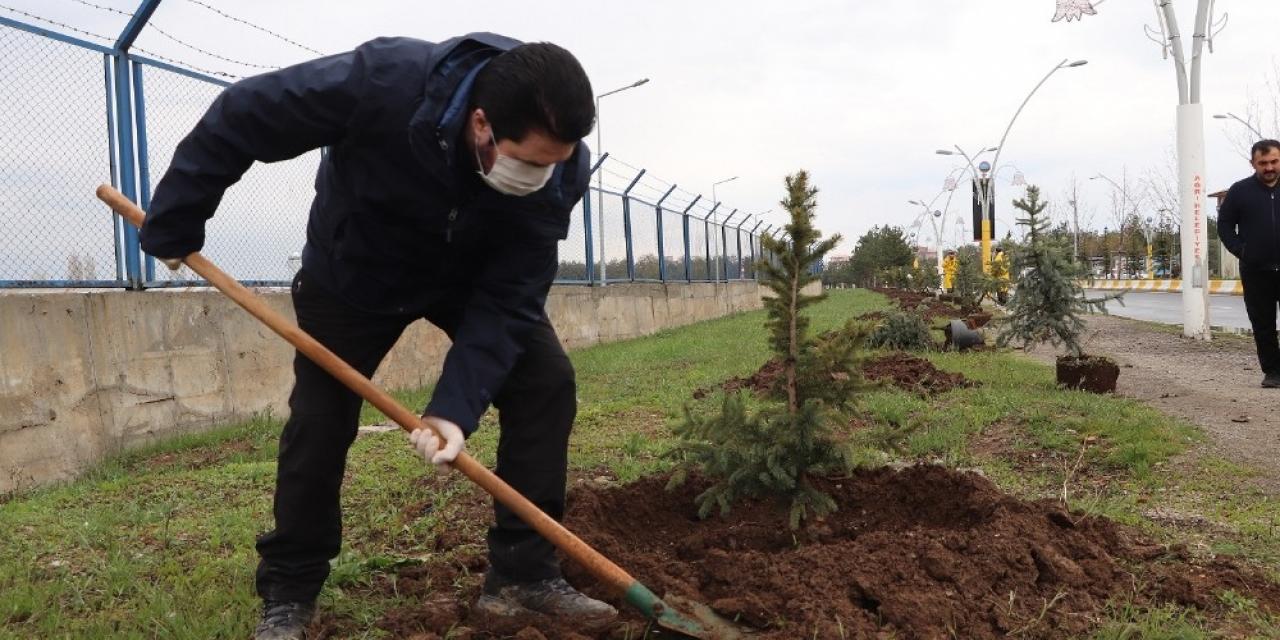 Ağrı Belediyesi 10 bin ağaç dikecek