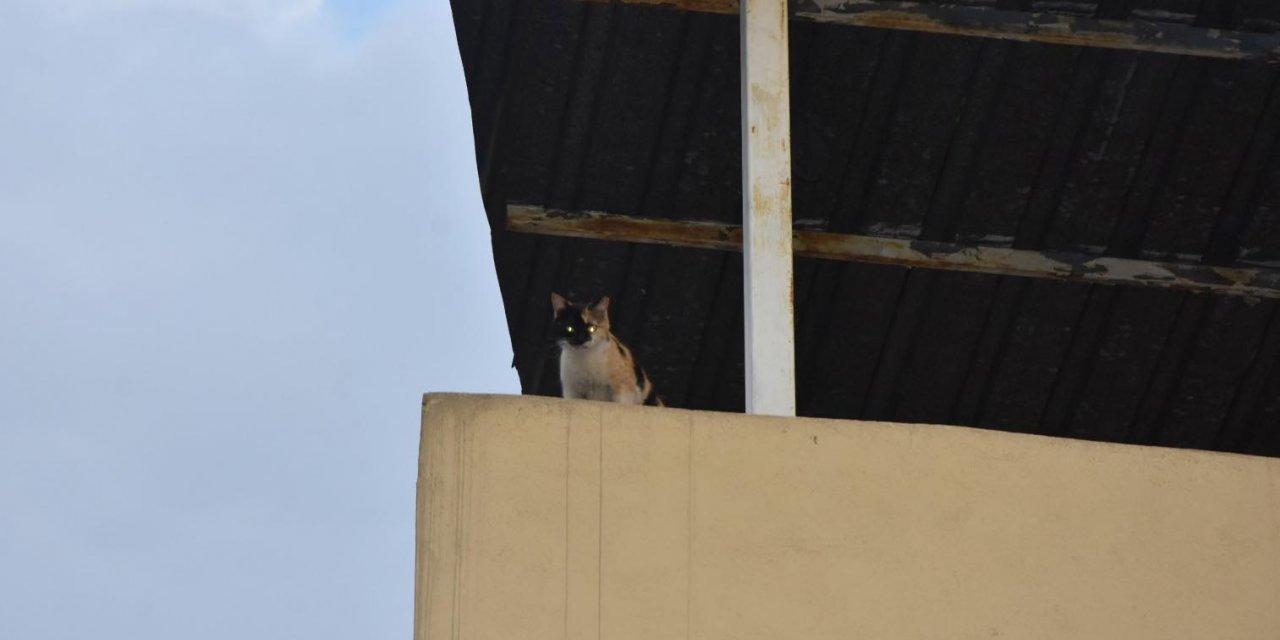 Terasta mahsur kalan kediyi, itfaiye kurtardı