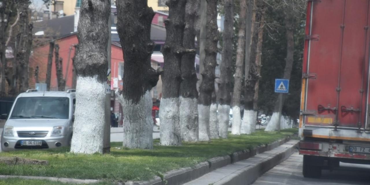 Tatvan'da ağaçlar kireçleniyor