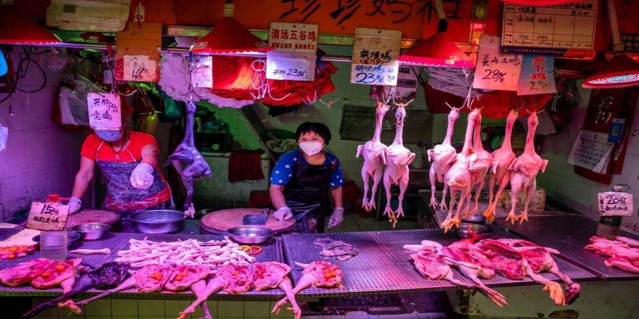 Salgının başladığı Çin'de yasaklara vahşi hayvan tüketimi sürüyor