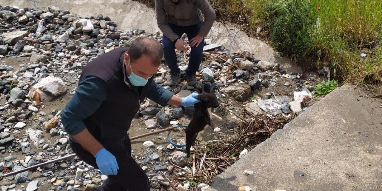 Yağmur suyu menfezindeki 7 yavru köpek kurtarıldı