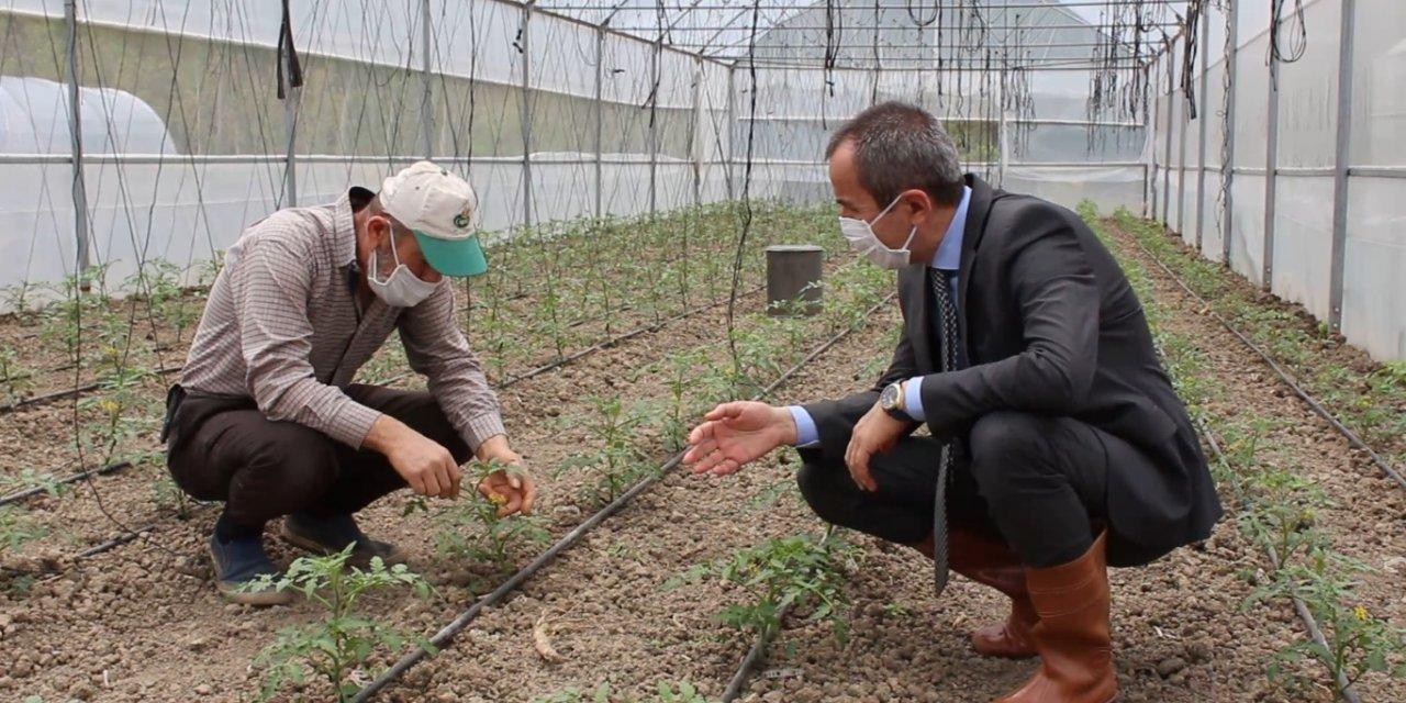Karabük'te maniye domatesinin ekimine başlandı