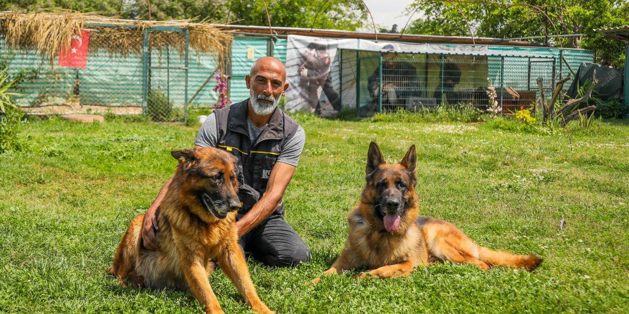 'Köpekler, koronavirüslü hastayı tespit için eğitilebilir'