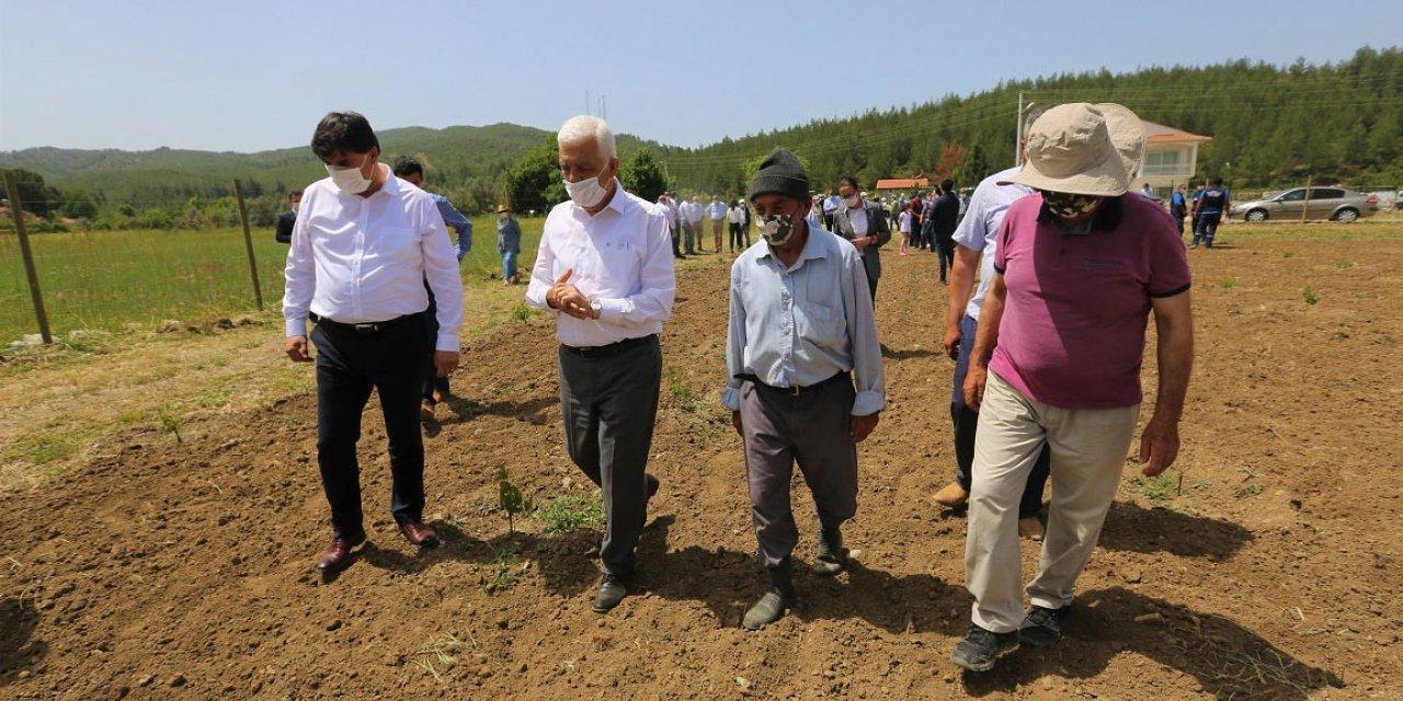 Muğla'da belediye asma bahçesi kurdu