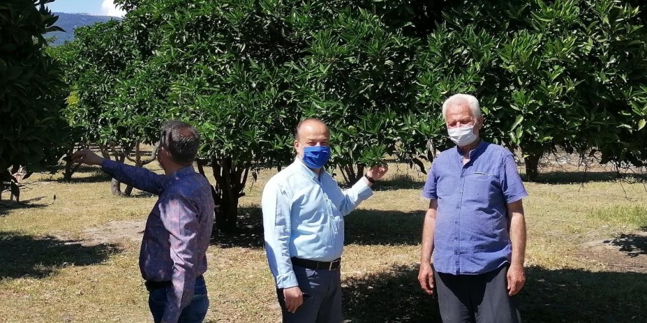 """AK Partili Yavuz, """"Portakal üreticilerimizin yanındayız"""""""