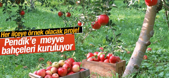 Pendik'e meyve bahçeleri kuruluyor