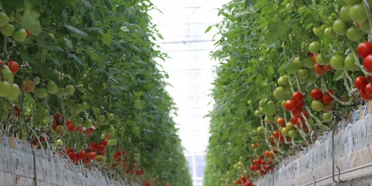 """""""Jeoterma kaynaklı tarımsal üretim 5 yıl içinde 5 kat artacak"""""""