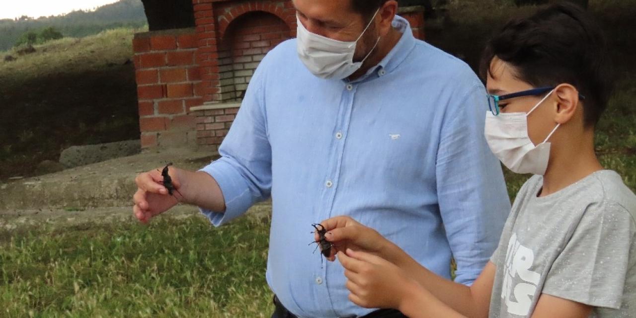 Geyik böceklerini doğaya belediye başkanı uğurladı