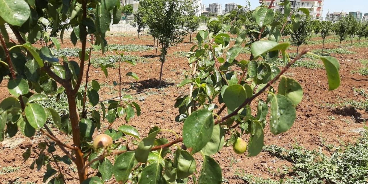 Kent içi tarım 'meyve' vermeye başladı