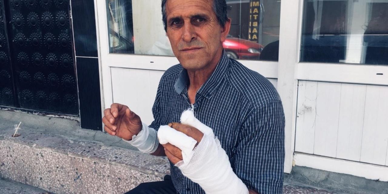 Yozgat'ta ayının saldırısına uğrayan adam yaralandı