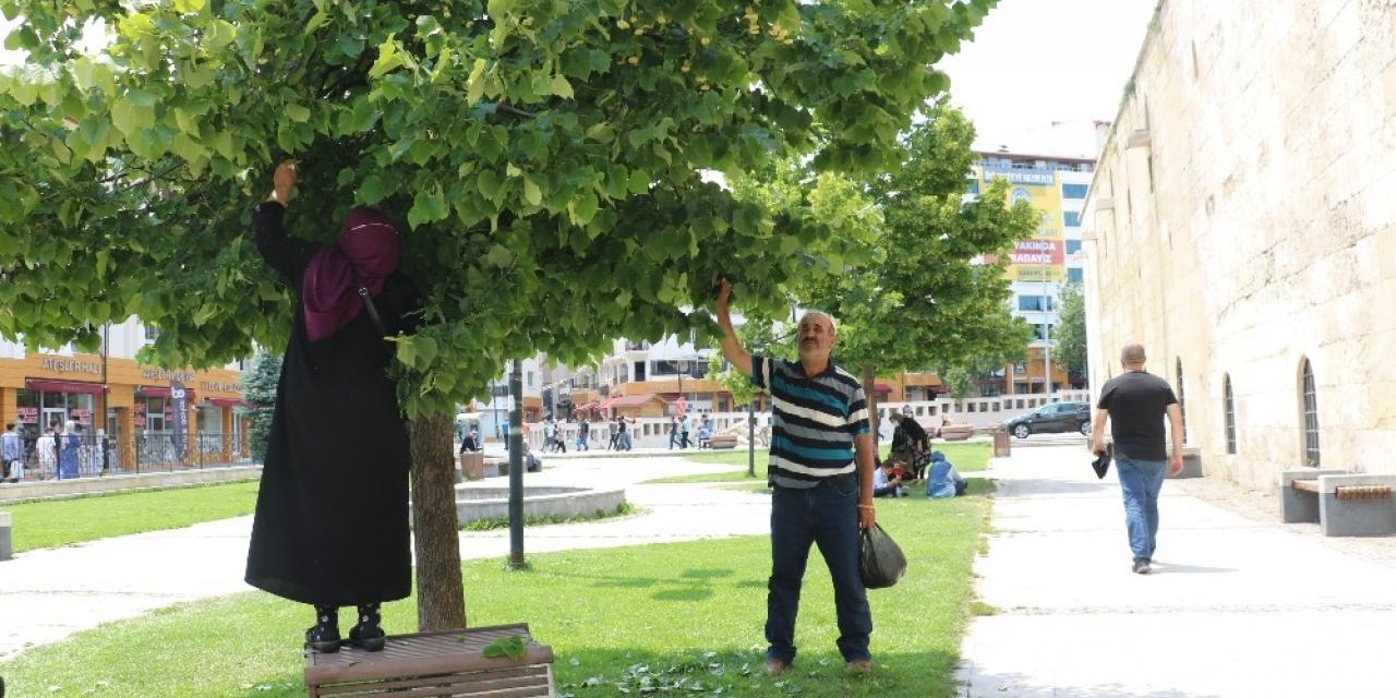 Aktarda 90 TL, Sivas'ın parklarında bedava