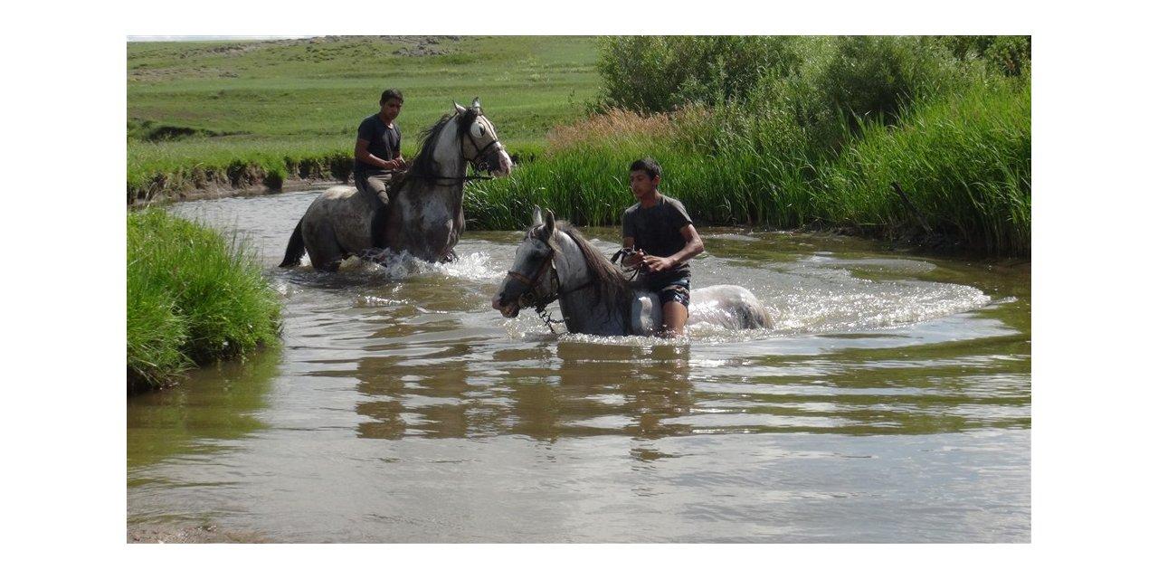 Cirit atları derelerde yıkanıyor