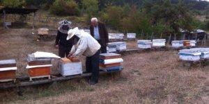 Zonguldak, Karabük ve Bartın'da tesis edilen 11 adet bal ormanı arıcıların yüzünü güldürüyor