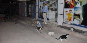 Siirt'te sokak hayvanları unutulmadı