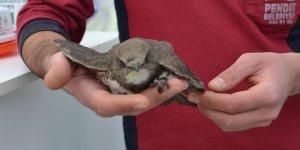 Uçamayan Ebabil Kuşu Pendik'te Koruma Altına Alındı
