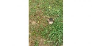 Alanya'da kedi vahşeti
