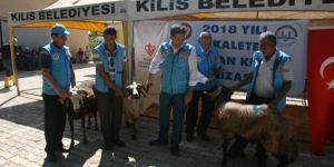 Bakanların Kurbanları Kilis'te kesildi