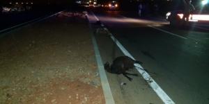 Hatay'da iki otomobil yoldaki keçilere çarptı: 13 küçükbaş hayvan telef oldu
