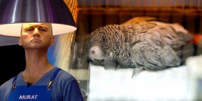 Papağana işkence yapıp ölümüne yol açan Murat Özdemir özürdiledi
