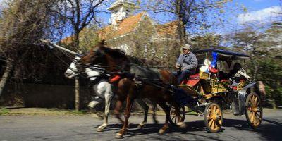 İBB, Adalar'daki atları satın almaya başladı