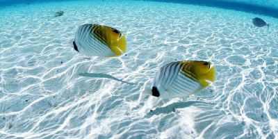 Artık deniz suyunu tuzsuz içmek mümkün!
