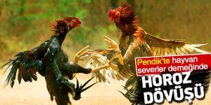 Pendik'te hayvan severler derneğinde horoz dövüşü!