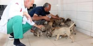 Sokak hayvanlarının hem hastanesi hemde evi oldu