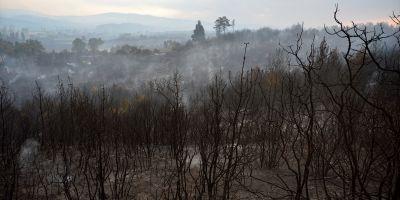 Çanakkale'deki orman yangını binlerce ağacı yok etti