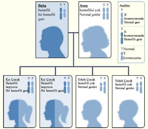 Hemofili Nedir, Belirtileri Nelerdir, Nasıl Tedavi Edilir | 17 Nisan Dünya Hemofili Günü