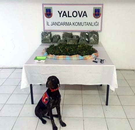 """Yalova'da """"skunk"""" adlı yeni nesil uyuşturucu ele geçirildi"""