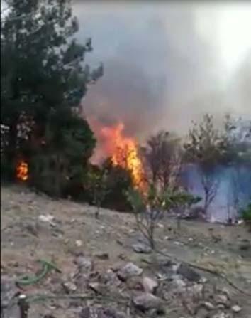 Payas'ta orman yangını