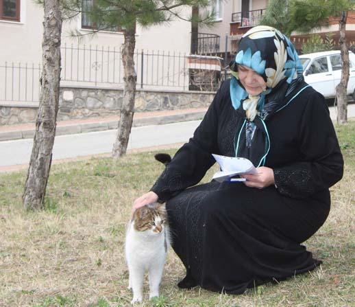 Kedilerin mama kaplarını yıktılar, onlarca sokak kedisi aç kaldı